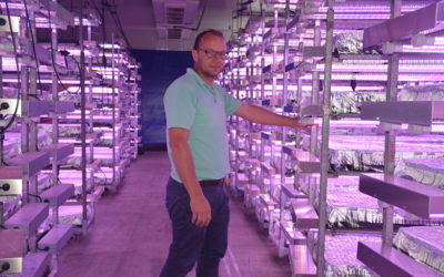 Florensis chooses multi-layer cultivation system from AGRO LED BV