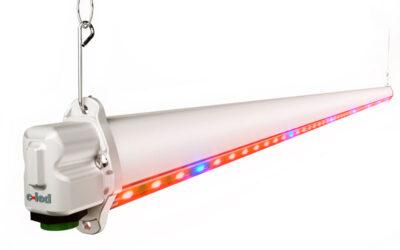 C-LED COMBO lamp